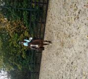 WELC_Summer_Horse Riding